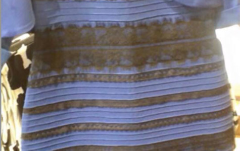 Black, blue, white and gold – make your choice, and be polled!