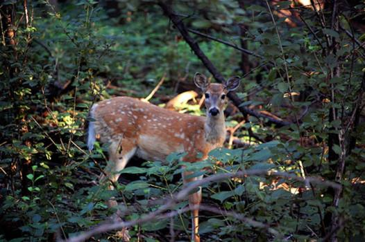 Recreational hunting given undeserved disapproval