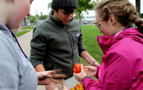 New Gardens Bring Fresh Food To School Lunches