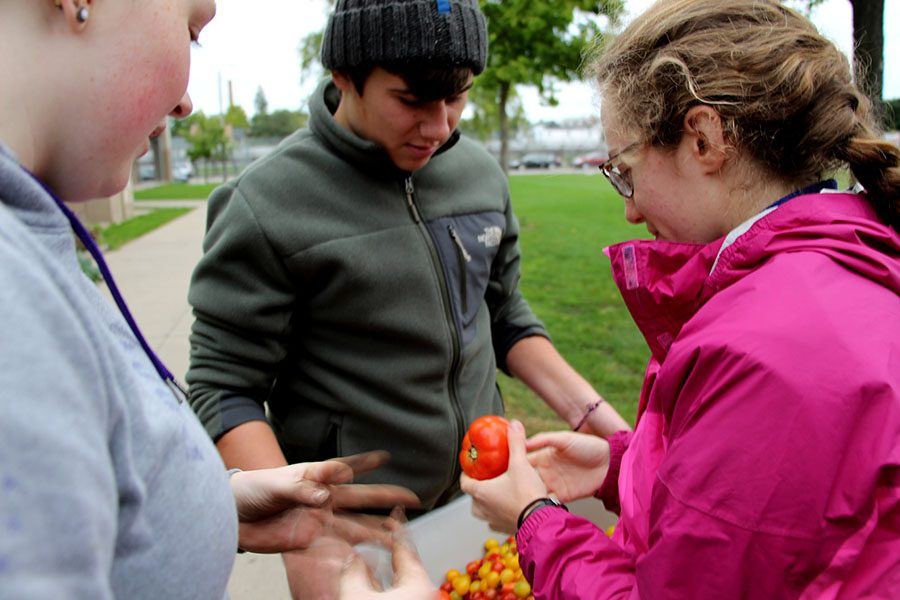 South students Anna Mulhern, Joe Kaelin and Maren Stone were excited about the plentiful harvest of tomatoes gathered this week. NHS students in the Pretty Committee are harvesting Souths gardens for food to be used in our lunches.